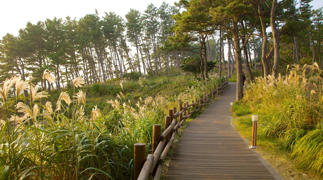 Jeju Island showing landscape views, a park and forest scenes
