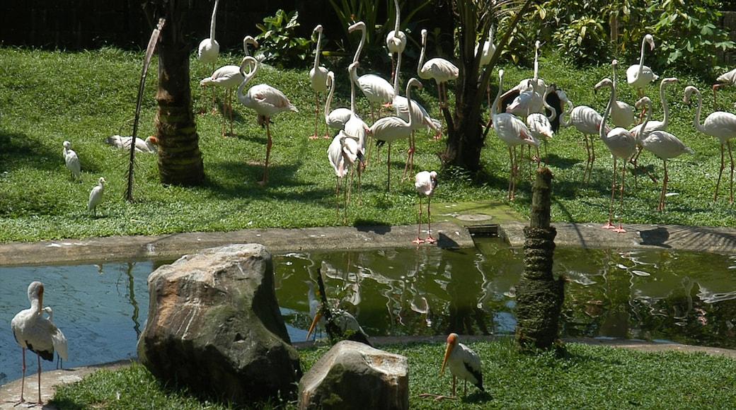 Lake Gardens showing tranquil scenes, a lake or waterhole and zoo animals