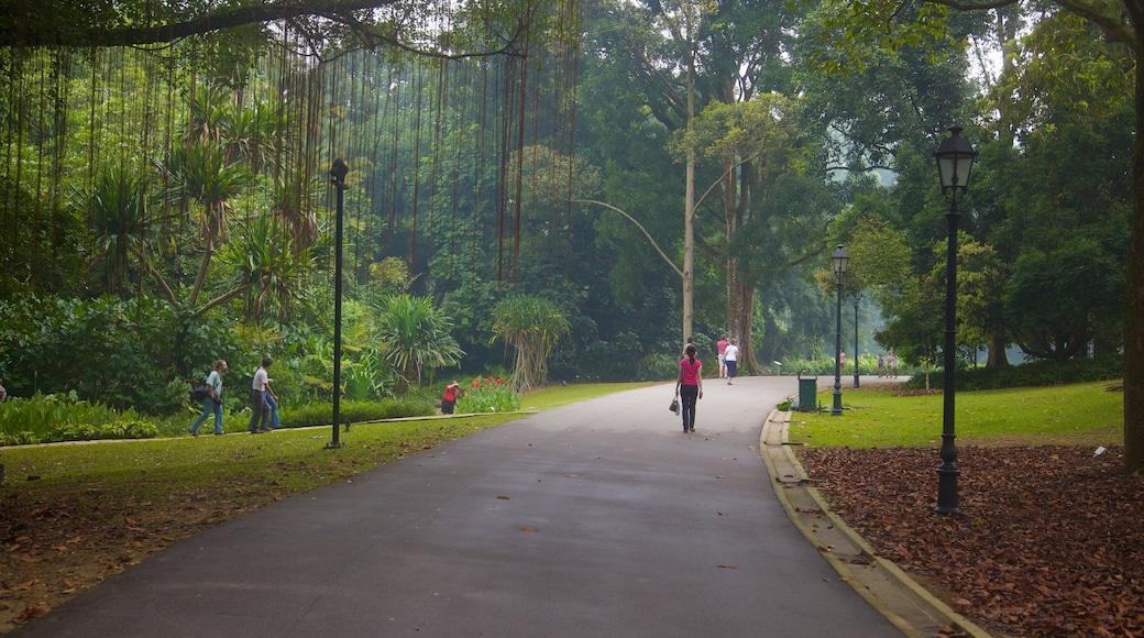 Singapore Botanic Gardens which includes a park