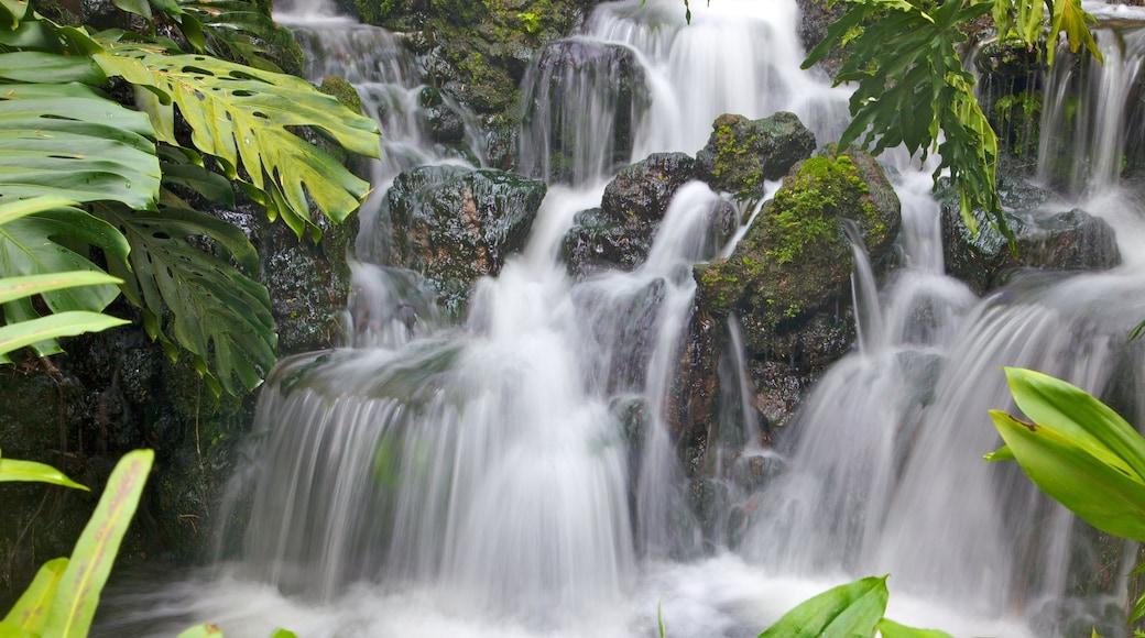 新加坡植物園 设有 瀑布 和 熱帶風景