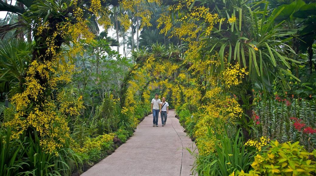 Singapore Botanic Gardens featuring a park