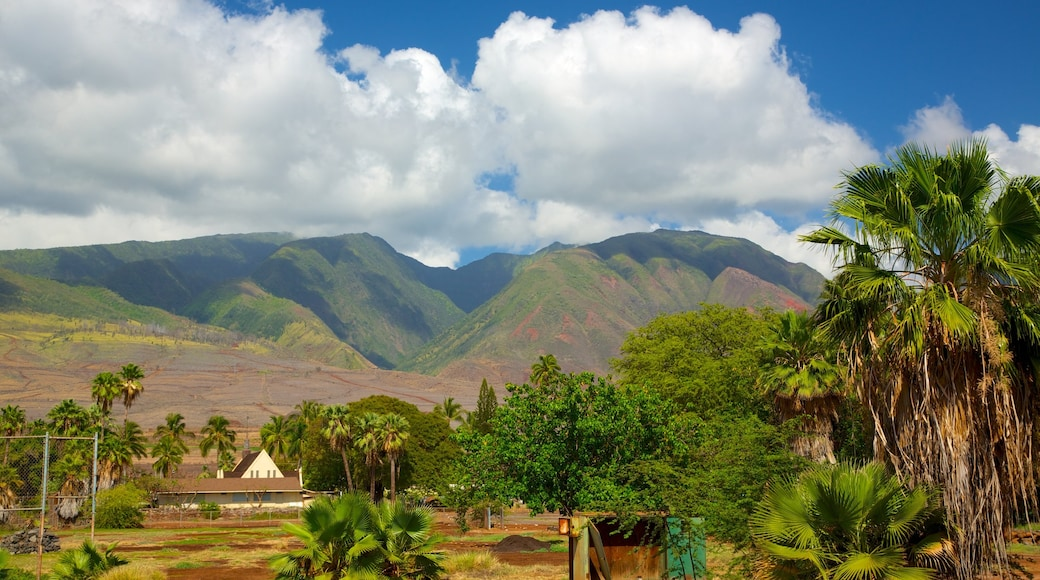 Lahaina featuring tropical scenes and landscape views