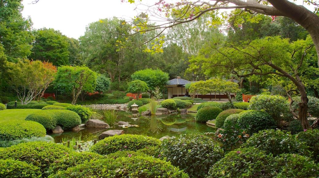 Brisbane Botanic Gardens featuring a pond, forest scenes and a garden