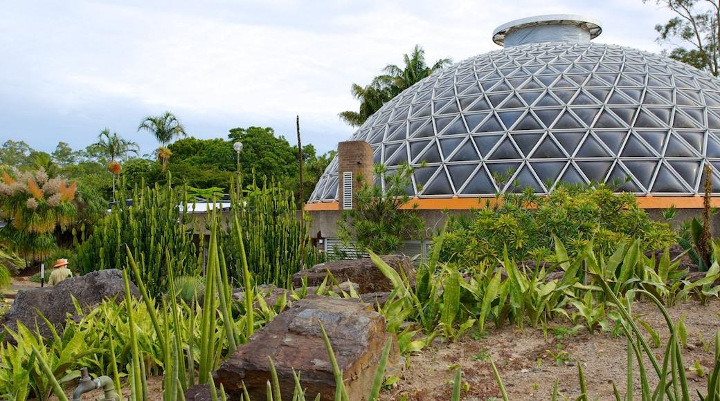 Brisbane Botanic Gardens showing a park