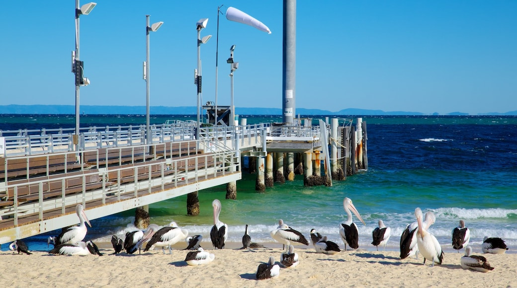 Moreton Island National Park showing a bay or harbour, a sandy beach and bird life
