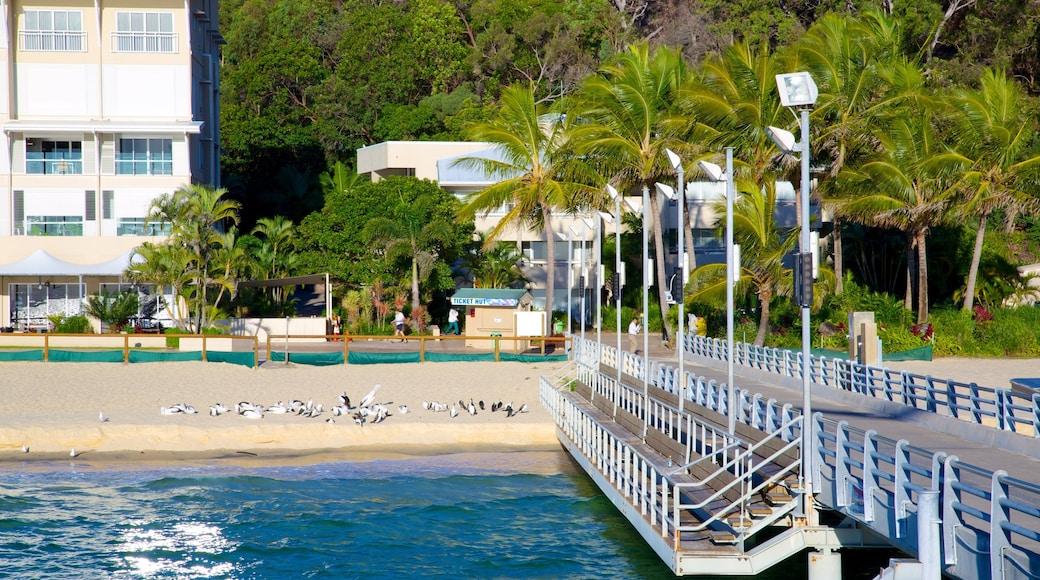 Moreton Island National Park showing tropical scenes