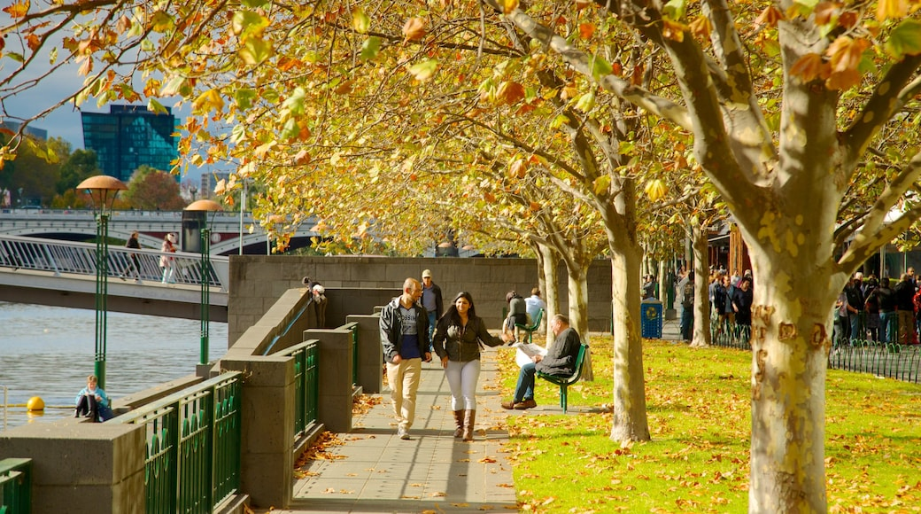 Southbank showing autumn leaves and a city as well as a couple