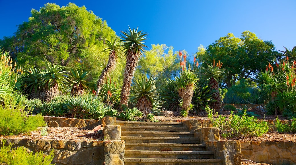 Kings Park and Botanic Garden which includes tropical scenes and a garden