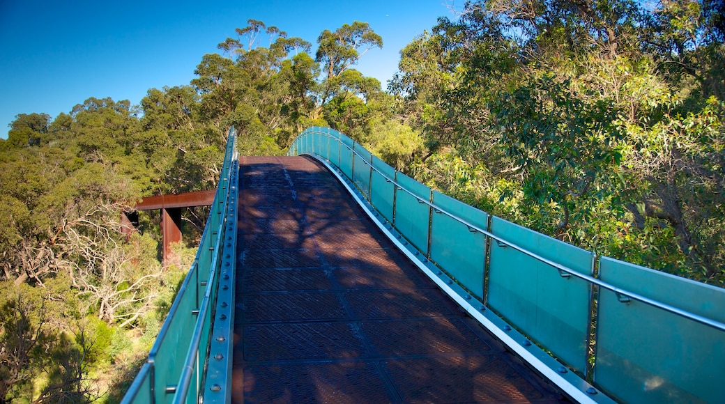 Kings Park and Botanic Garden featuring a park, a bridge and views