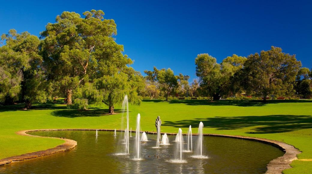 Kings Park and Botanic Garden joka esittää lähde ja puisto