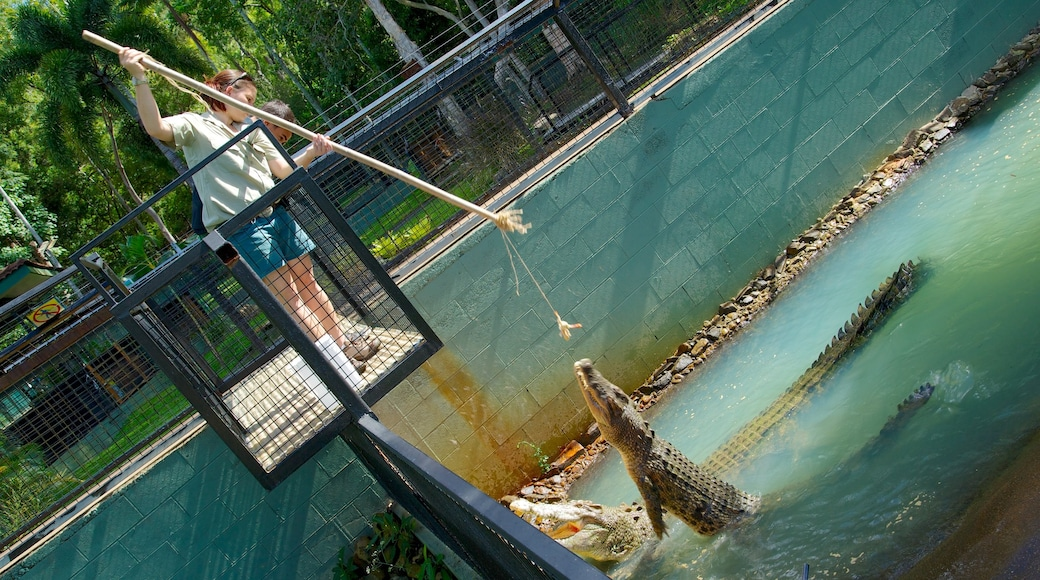 Cairns showing zoo animals and dangerous animals as well as an individual female