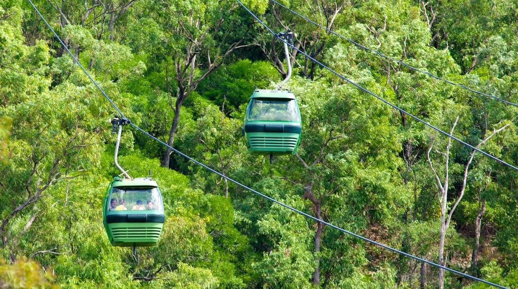 Skyrail Rainforest Cableway bevat bossen, een gondel en regenwoud