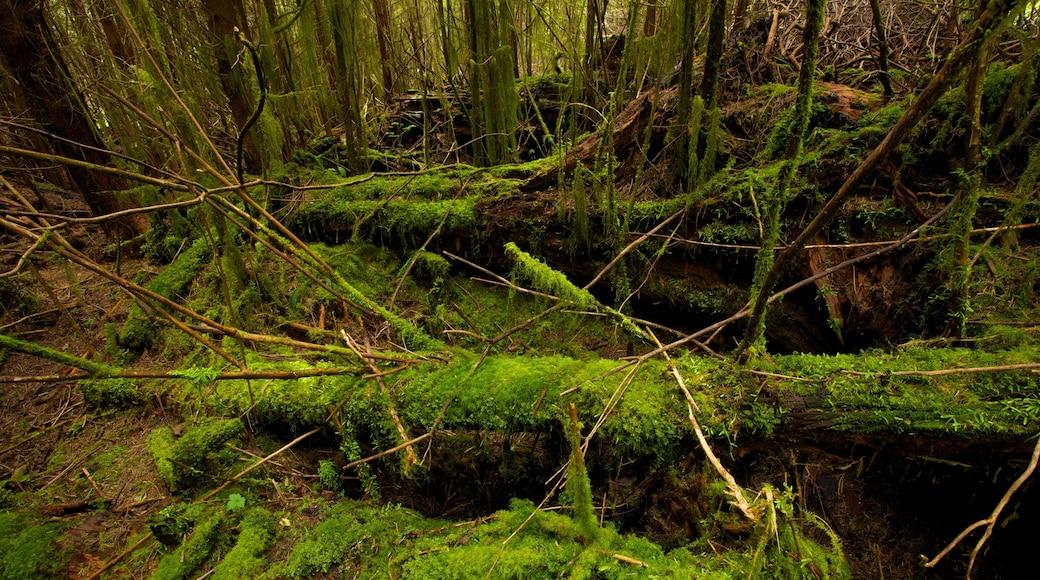 Victoria which includes rainforest