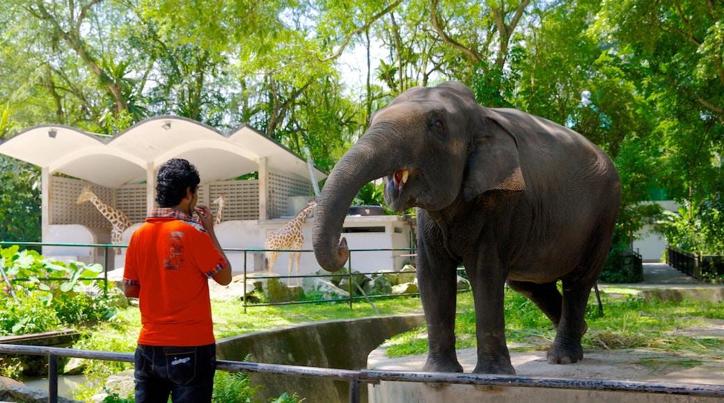 Zoo National que incluye animales del zoológico y animales terrestres y también un hombre