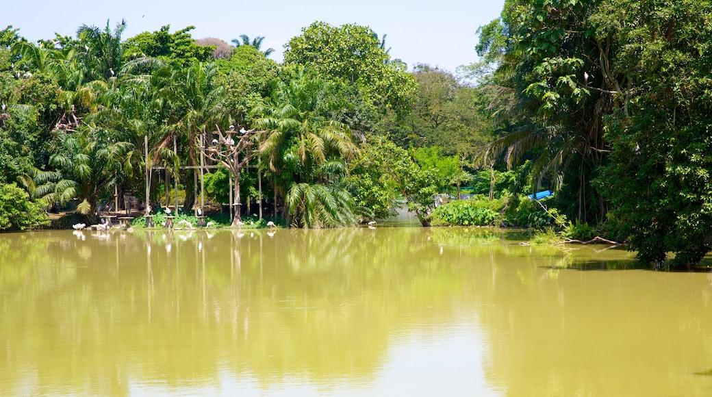 Zoo National ofreciendo animales del zoológico y un lago o abrevadero