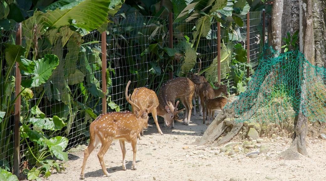 Zoo National que incluye animales del zoológico y animales tiernos