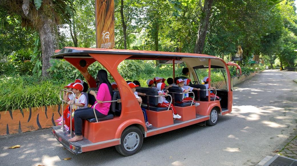Zoo National ofreciendo turismo en vehículo y animales del zoológico y también niños