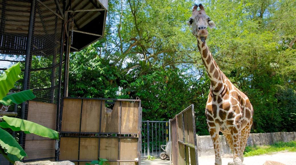 Zoo National que incluye animales terrestres y animales del zoológico