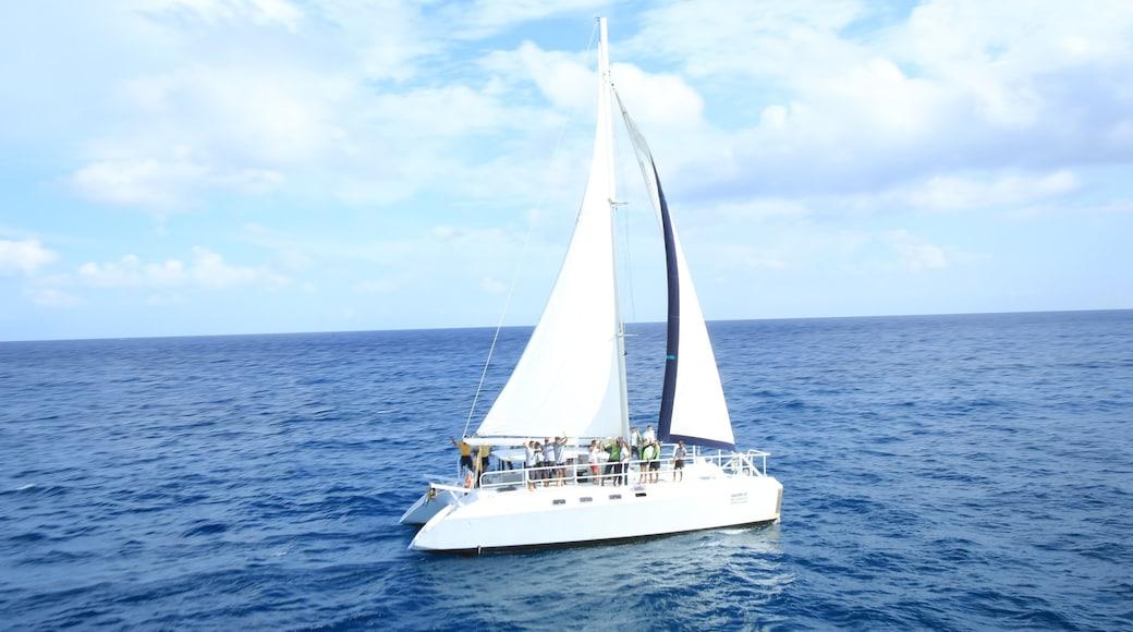 Dolphin Discovery ofreciendo navegación