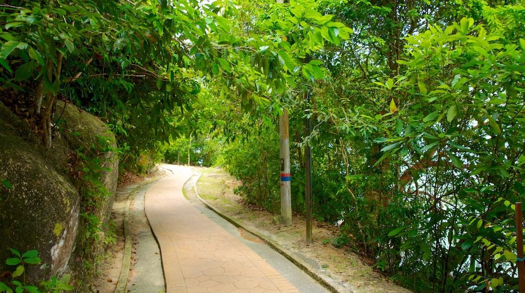 檳城國家公園 呈现出 公園