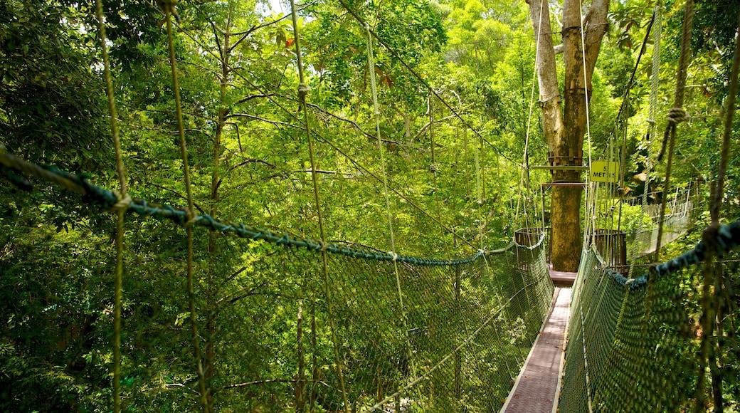 檳城國家公園 设有 吊橋或樹梢步道 和 森林風景