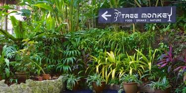 熱帶香料花園 呈现出 花園 和 指示牌