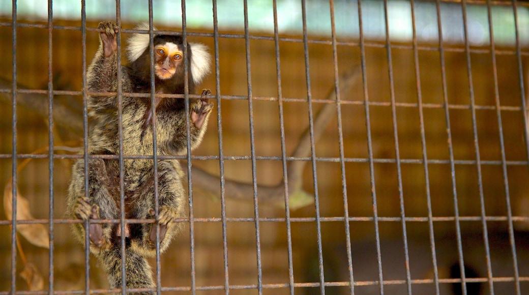 柔佛巴魯 呈现出 動物園裡的動物 和 可愛或友善的動物