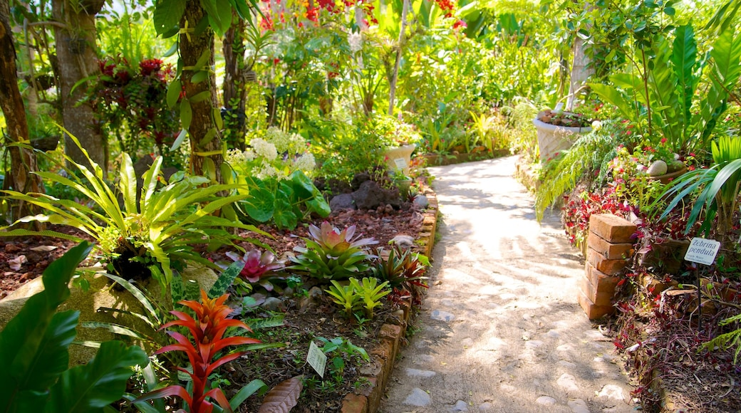 Jardines Botánicos de Puerto Vallarta que incluye un jardín