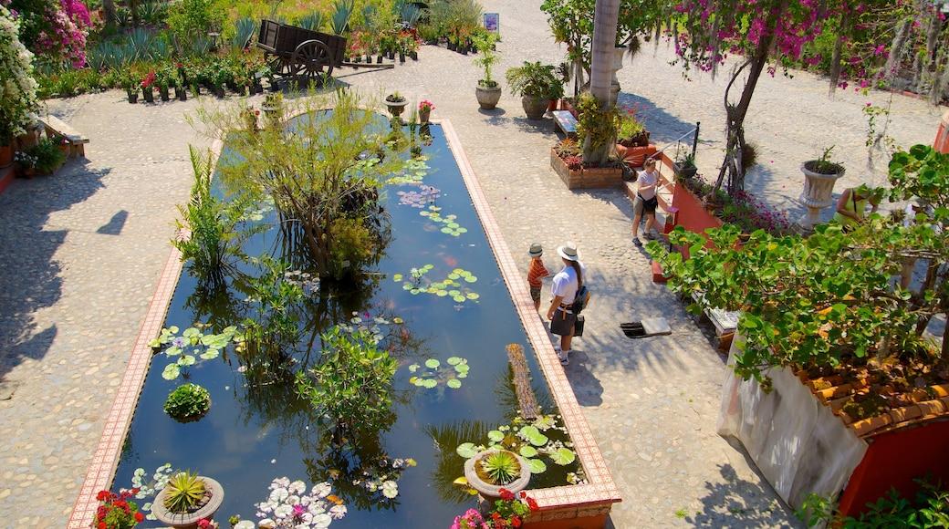 Jardines Botánicos de Puerto Vallarta mostrando un parque y un estanque