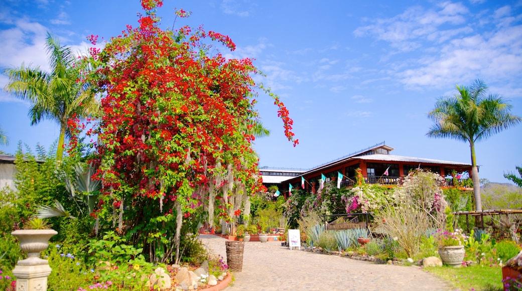 Jardines Botánicos de Puerto Vallarta ofreciendo flores y un parque