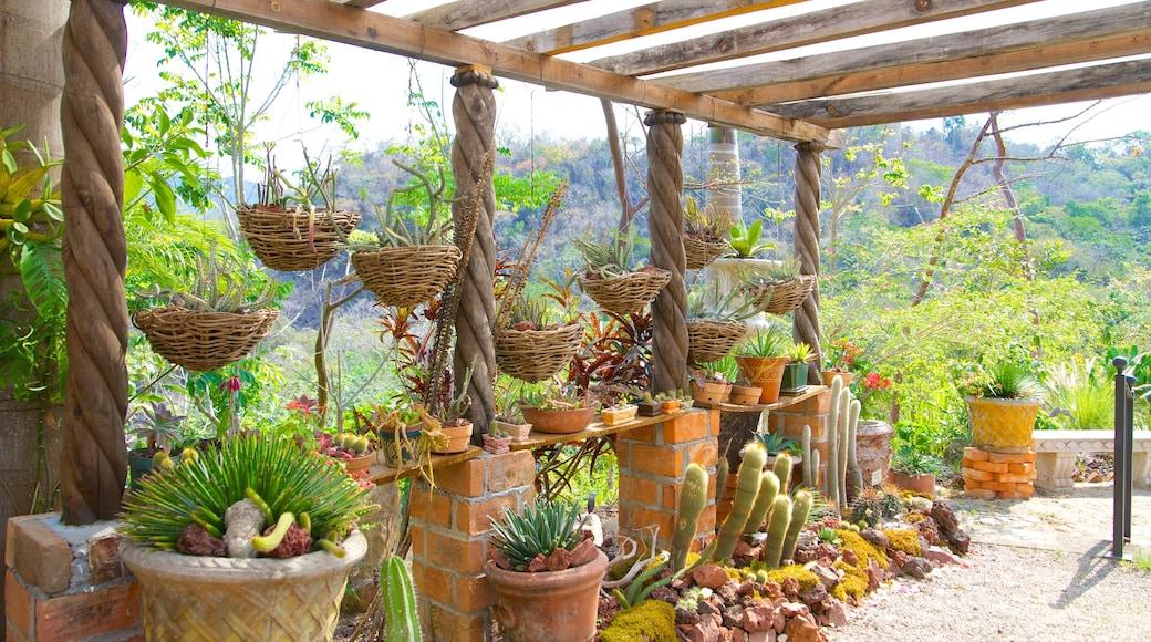 Jardines Botánicos de Puerto Vallarta que incluye un parque