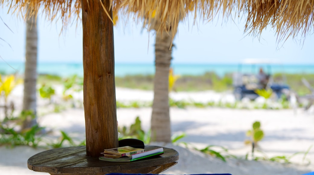 Holbox que incluye escenas tropicales y una playa