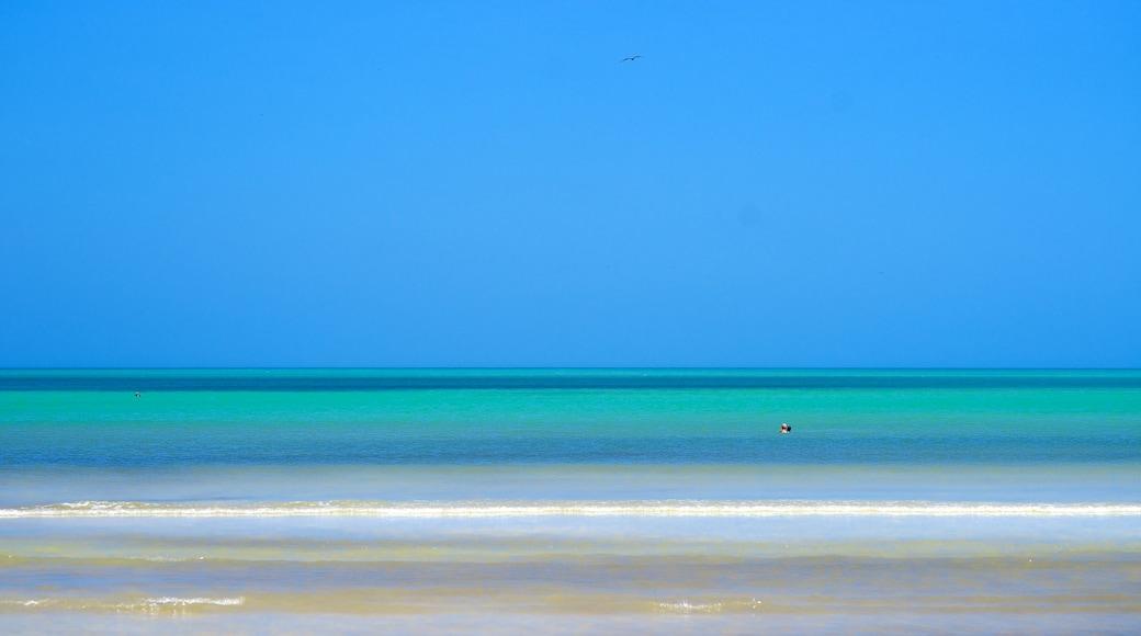 Isla Holbox showing general coastal views and landscape views
