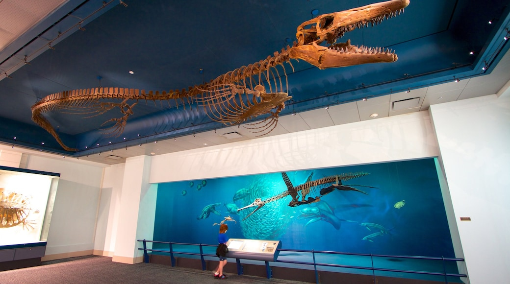 Carnegie Museum of Natural History mostrando vistas internas assim como uma criança sozinha