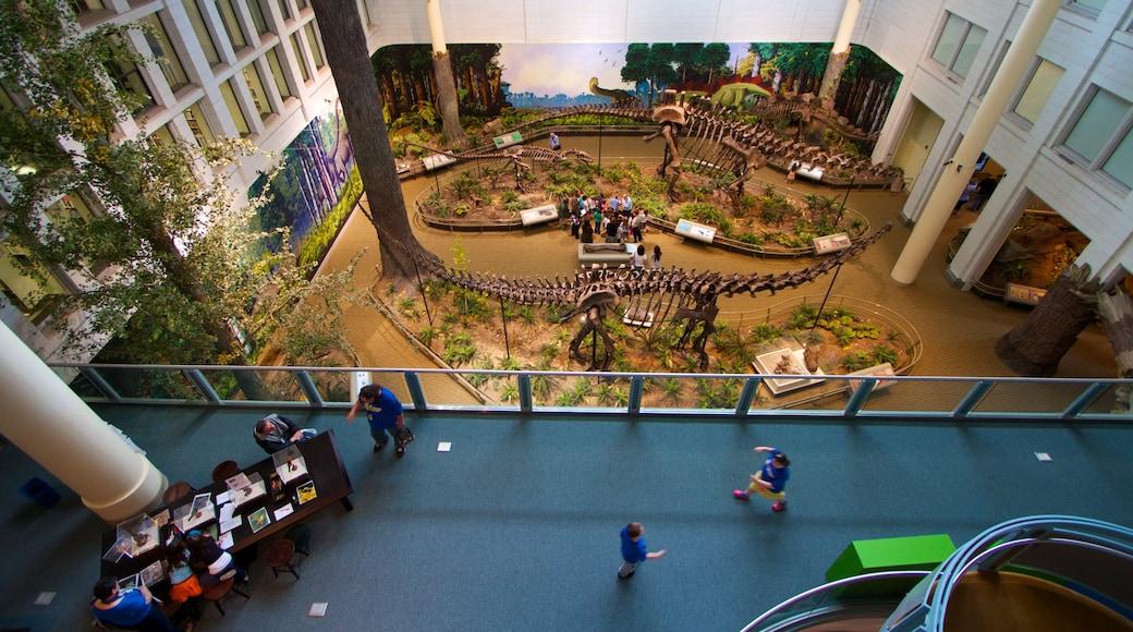Carnegie Museum of Natural History mostrando paisagens e vistas internas