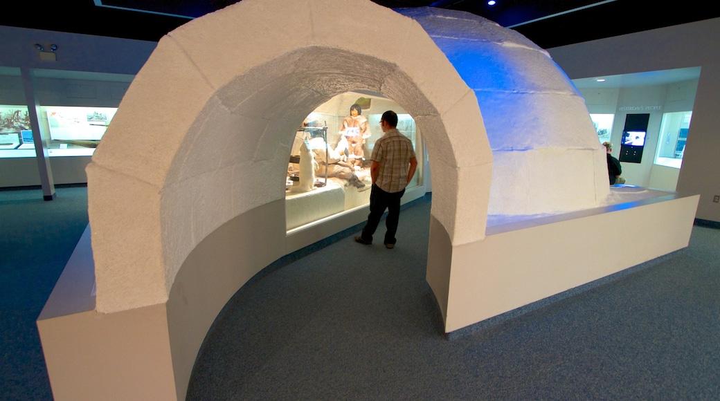 Carnegie Museum of Natural History que inclui vistas internas assim como um homem sozinho
