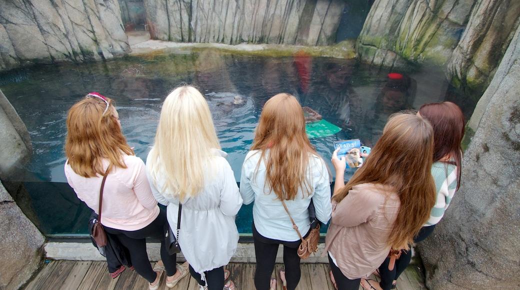 Pittsburgh Zoo and PPG Aquarium caracterizando animais de zoológico e vida marinha assim como um grande grupo de pessoas