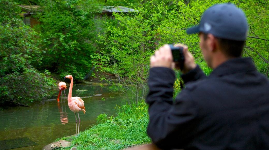 Pittsburgh Zoo and PPG Aquarium que inclui animais de zoológico, floresta tropical e vida das aves