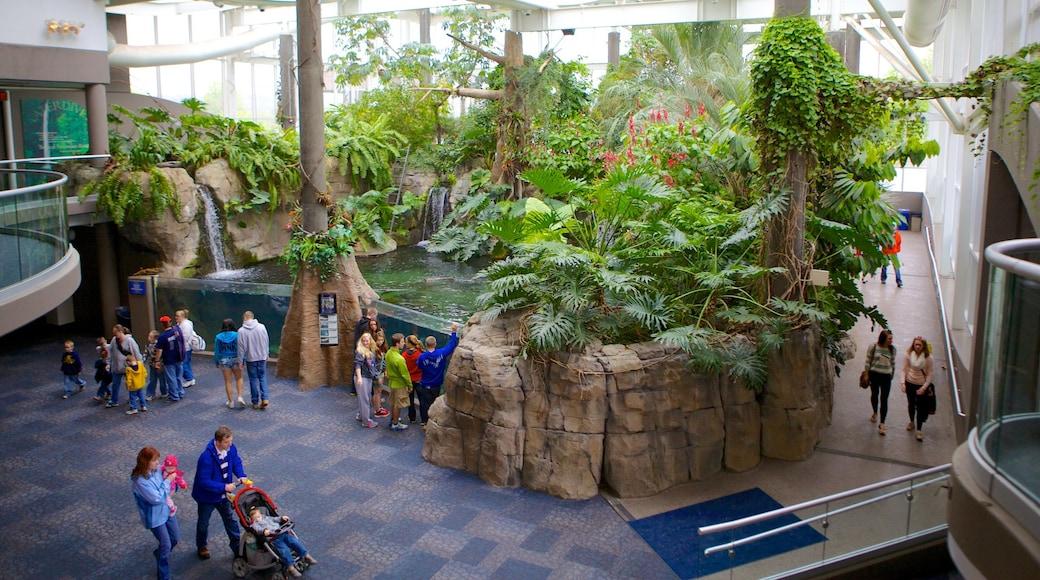 Pittsburgh Zoo and PPG Aquarium que inclui animais de zoológico e vistas internas assim como um grande grupo de pessoas