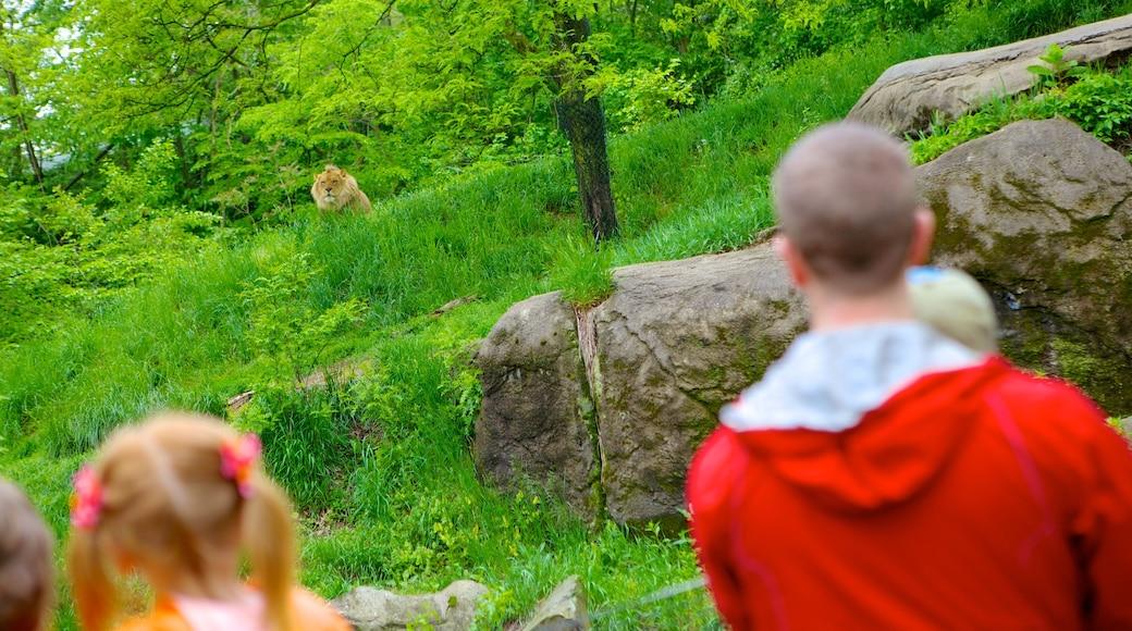 Pittsburgh Zoo and PPG Aquarium mostrando animais de zoológico e animais perigosos