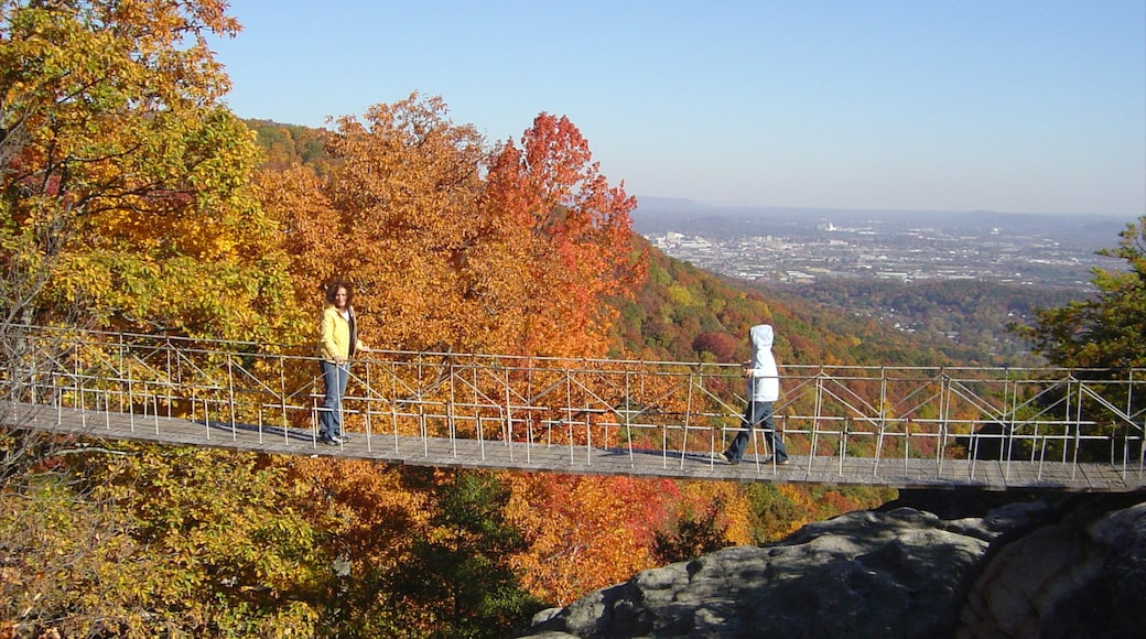 Chattanooga showing a bridge, autumn leaves and hiking or walking