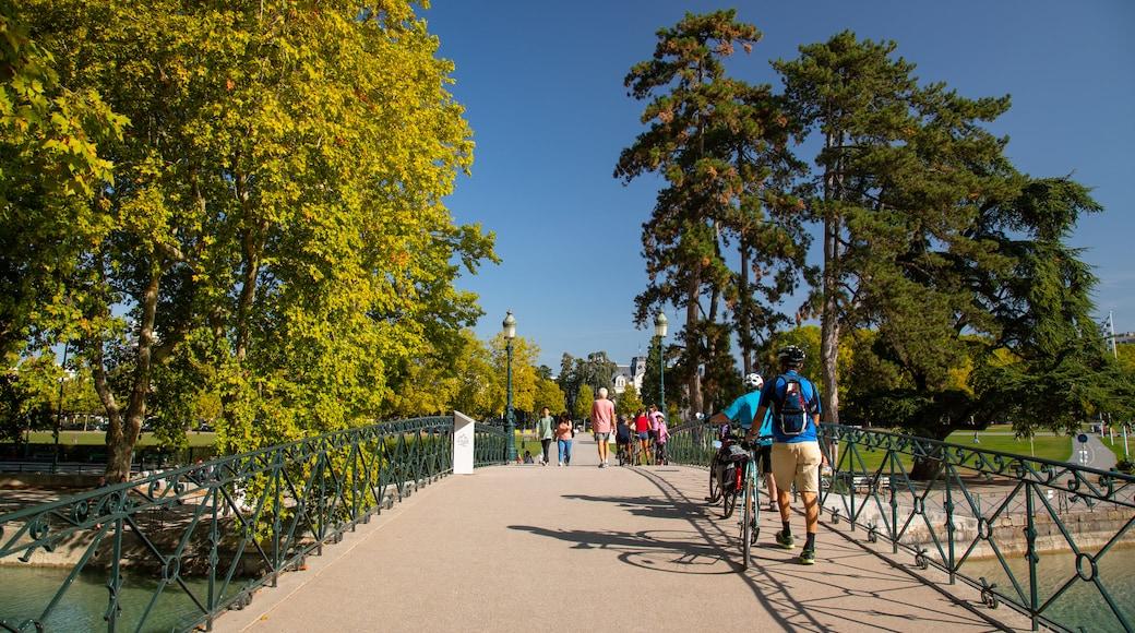 Amours Bridge