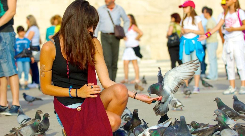 Syntagma-Platz das einen Vögel sowie große Menschengruppe