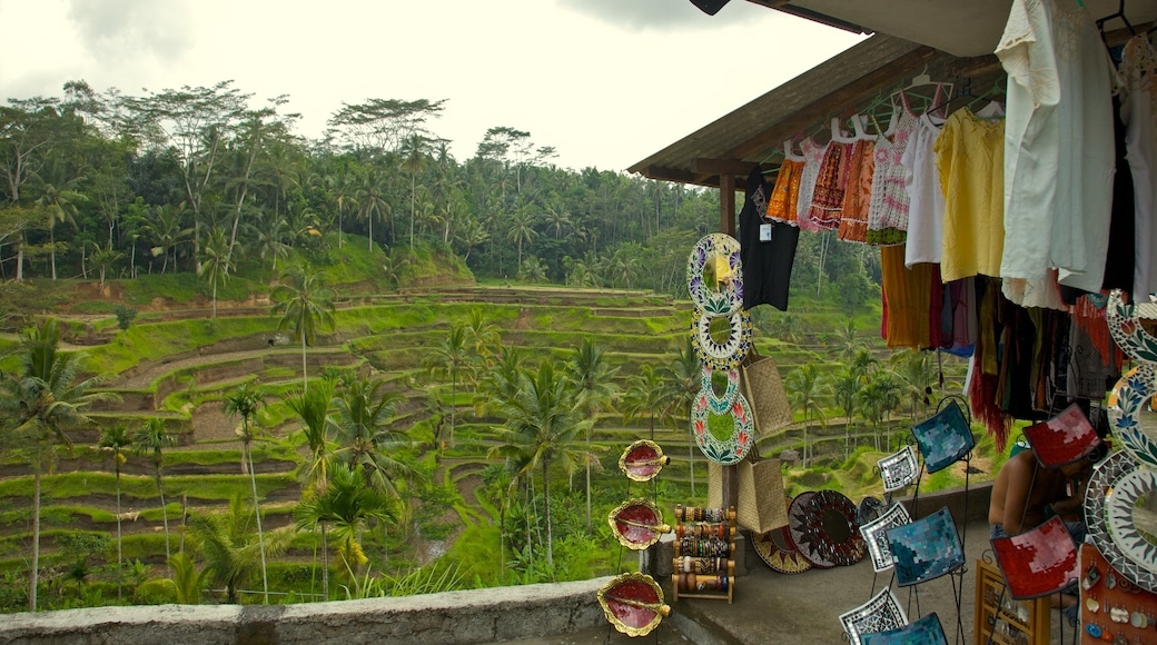 Tegallalang showing farmland, markets and a small town or village