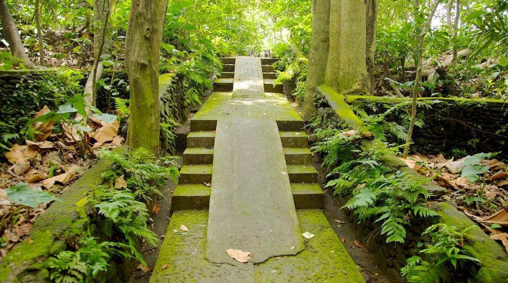 Foresta delle scimmie di Ubud caratteristiche di foresta pluviale