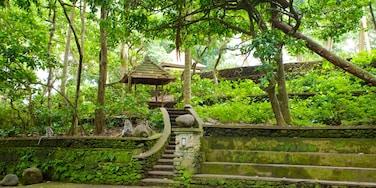 Forêt des singes d\'Ubud qui includes forêt vierge et temple ou lieu de culte