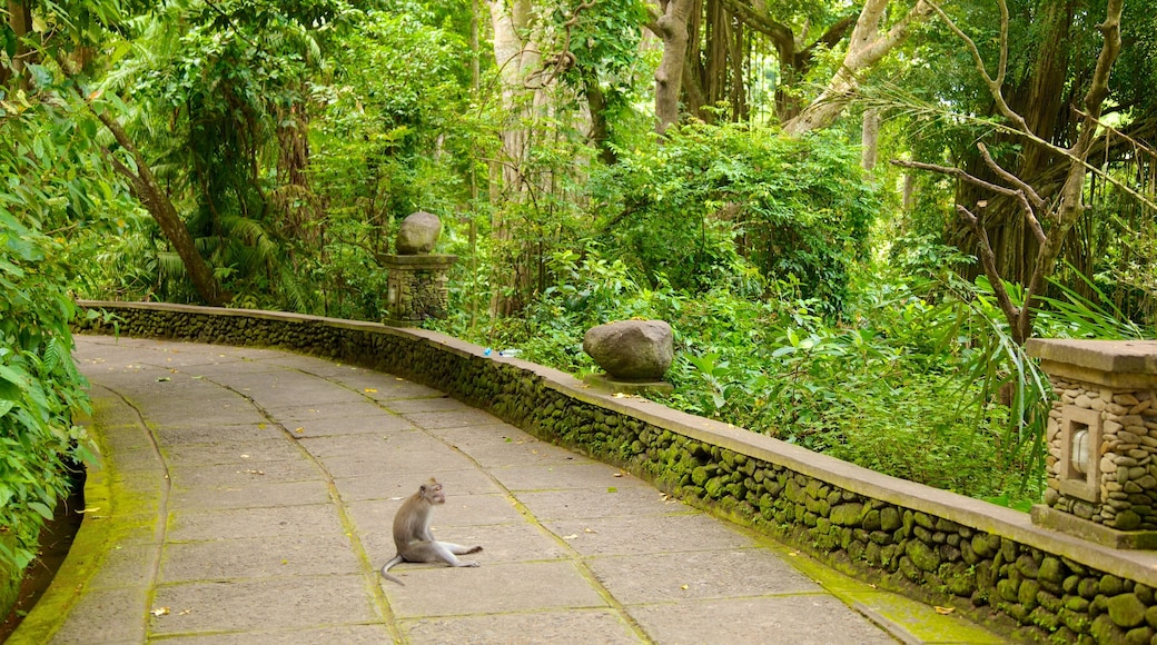 Ubud Monkey Forest featuring rainforest, cuddly or friendly animals and a temple or place of worship