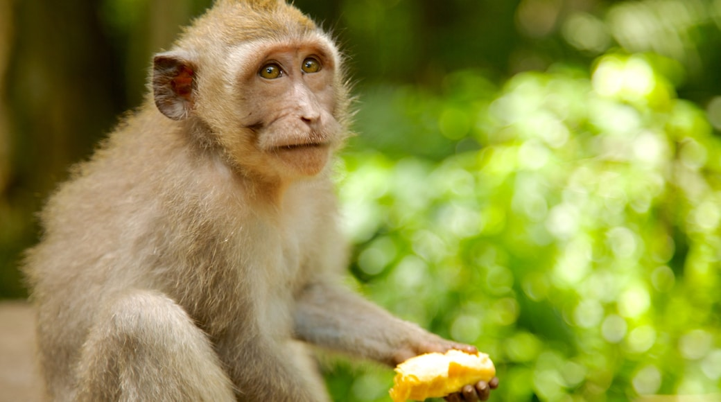 Ubud Monkey Forest which includes animals, zoo animals and cuddly or friendly animals