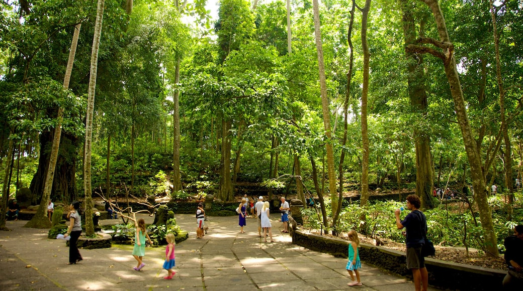 Ubud Monkey Forest featuring rainforest and a temple or place of worship as well as a large group of people