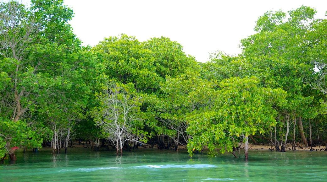 Turtle Island which includes rainforest and general coastal views